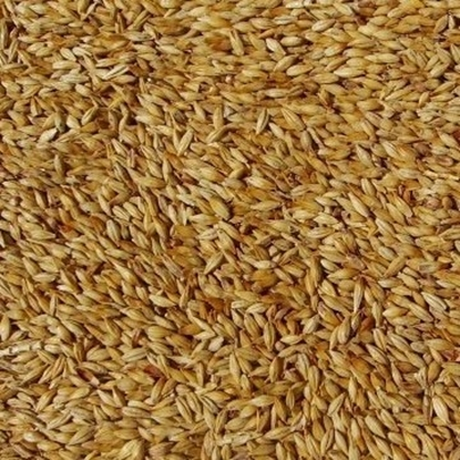 Picture of Aromatic Malt - Belgian (Dingemans)
