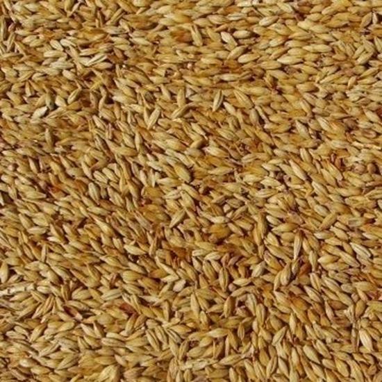 Picture of Biscuit Malt - Belgian (Dingemans) Special Price