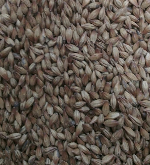 Picture of Red Back Malt (Gladfield)