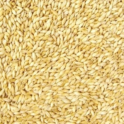 Picture of Pilsner Malt - Belgian (Dingemans)