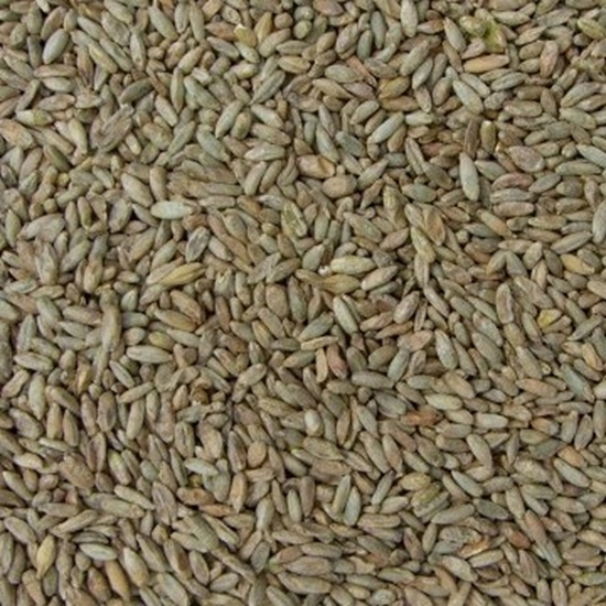 Picture of Rye  Malt (Weyermann)