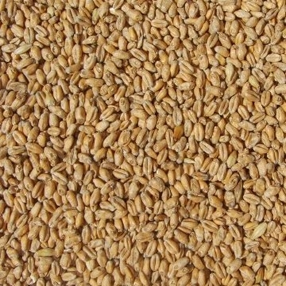 Picture of Wheat Malt Pale - Organic (Weyermann)
